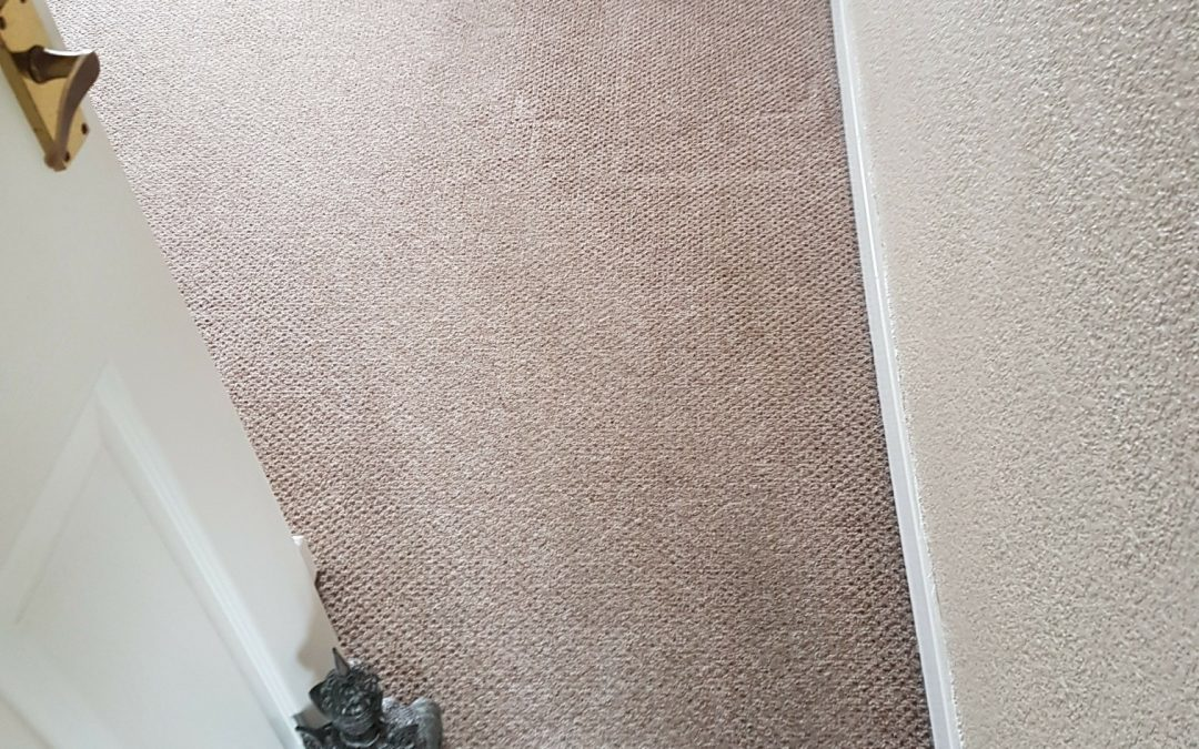 Carpet Cleaning Shipley